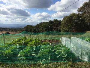 寺山学習農園1